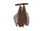 Image of a Bat | Rentokil China